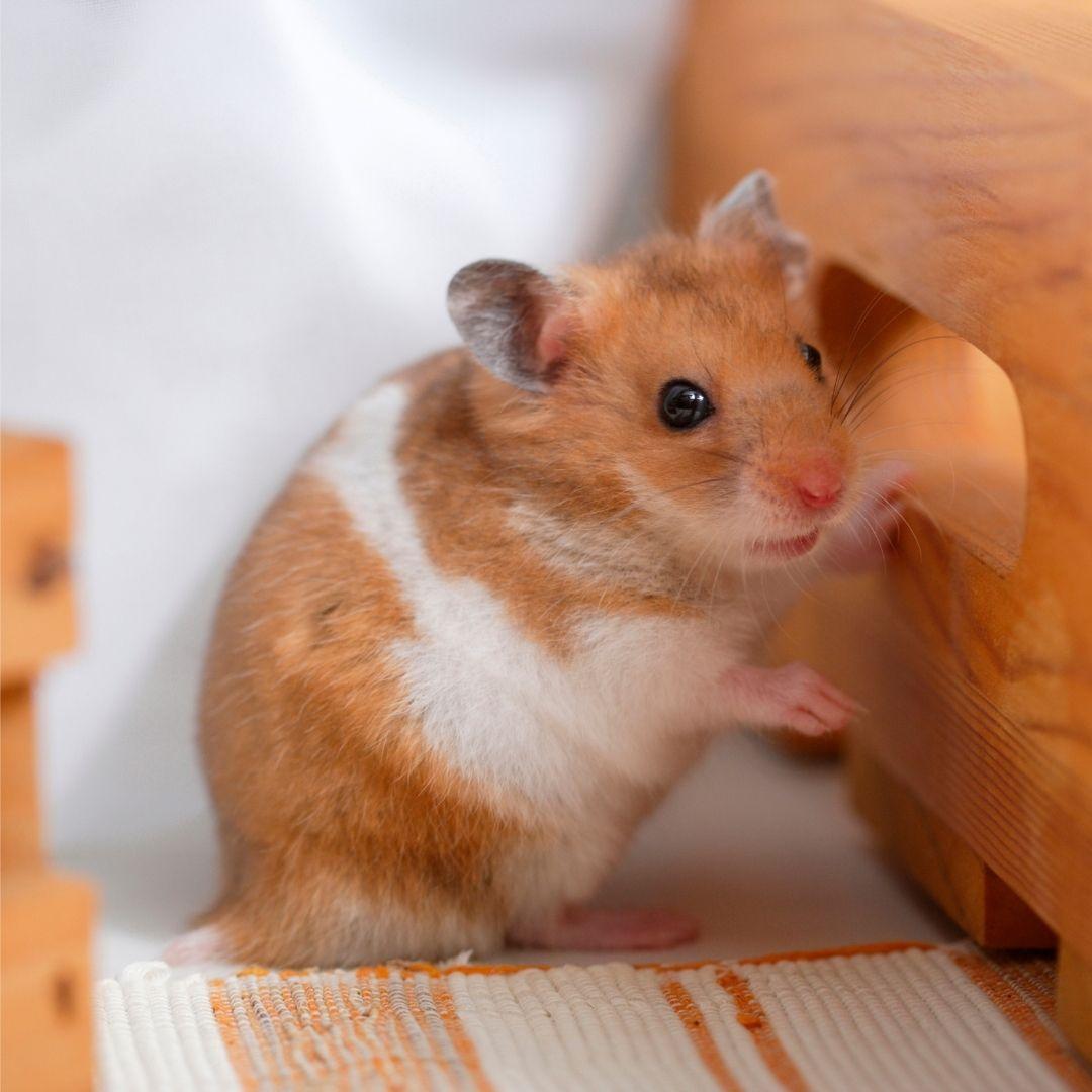 ANYMON hamster product